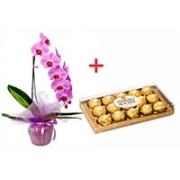 Presente Orquídea + bombom Ferrero Rocher