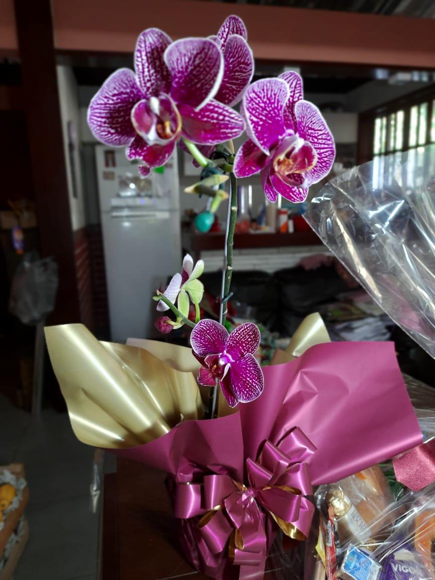 Arranjo de Orquídea
