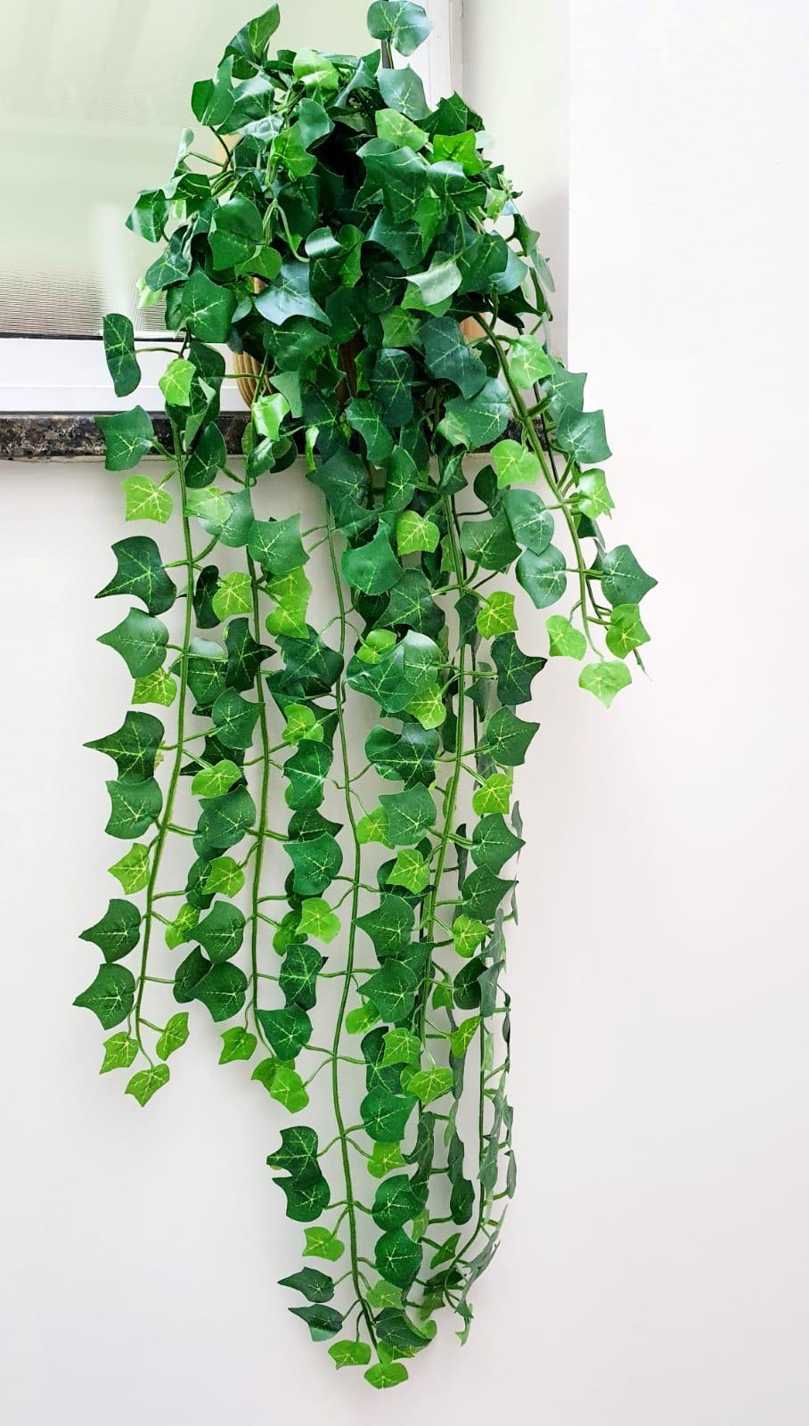 Planta Pendente Hera