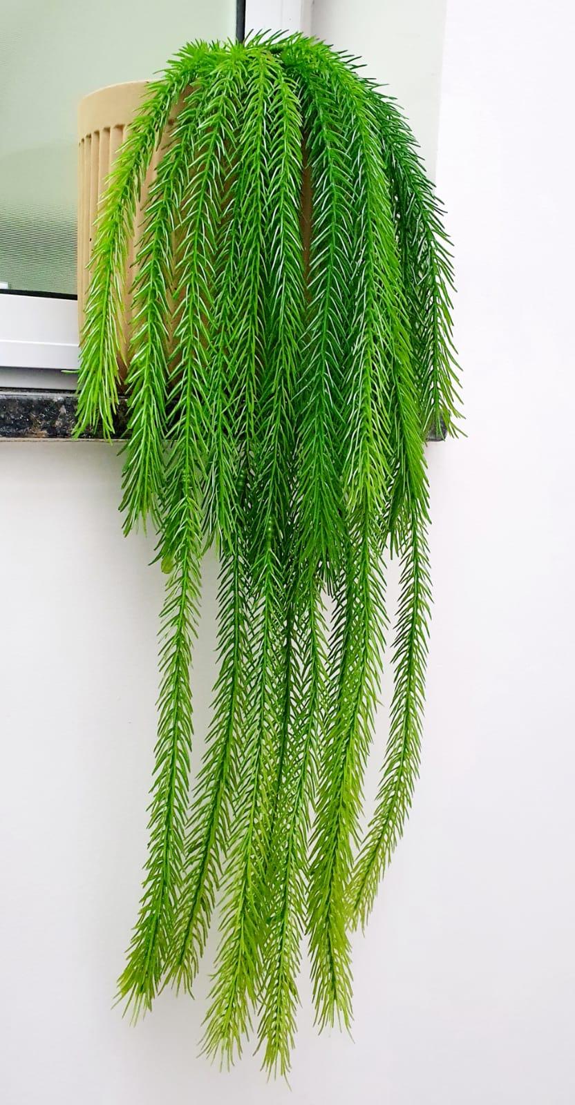 Planta Pendente Samambaia Lisa