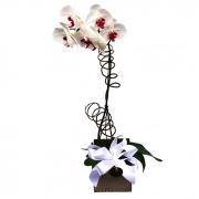 Orquídea Original