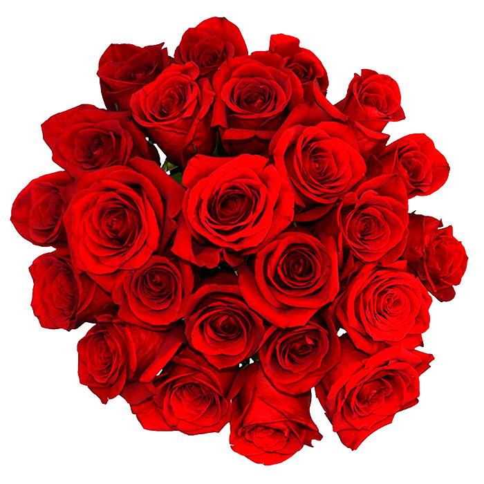 Falando Com Rosas
