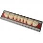 Dent Clean Posterior Inferior Imodonto