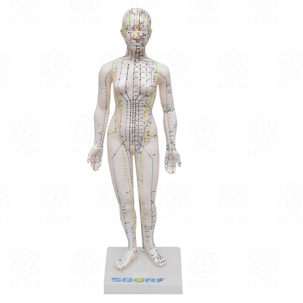 Modelo de Acupuntura Feminino de 50cm