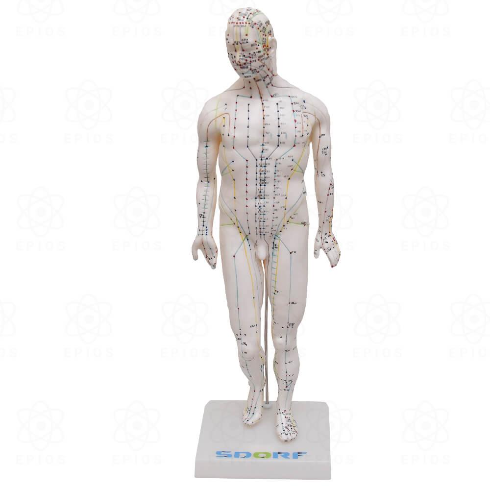Modelo de Acupuntura Masculino de 50cm