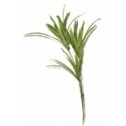 Planta Permanente - Dracena