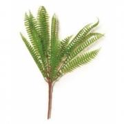 Planta Permanente - Samambaia