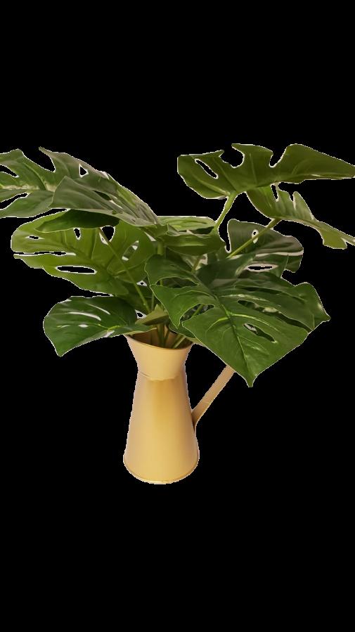 Planta Permanente - mini Costela de Adão
