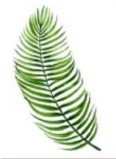 Quadro decorativo folha moldura em pinus caixa 30 x 40
