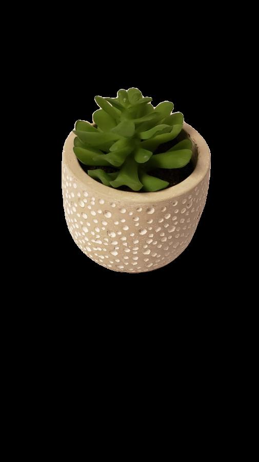 Vaso concreto Poá com planta permanente (sortida)