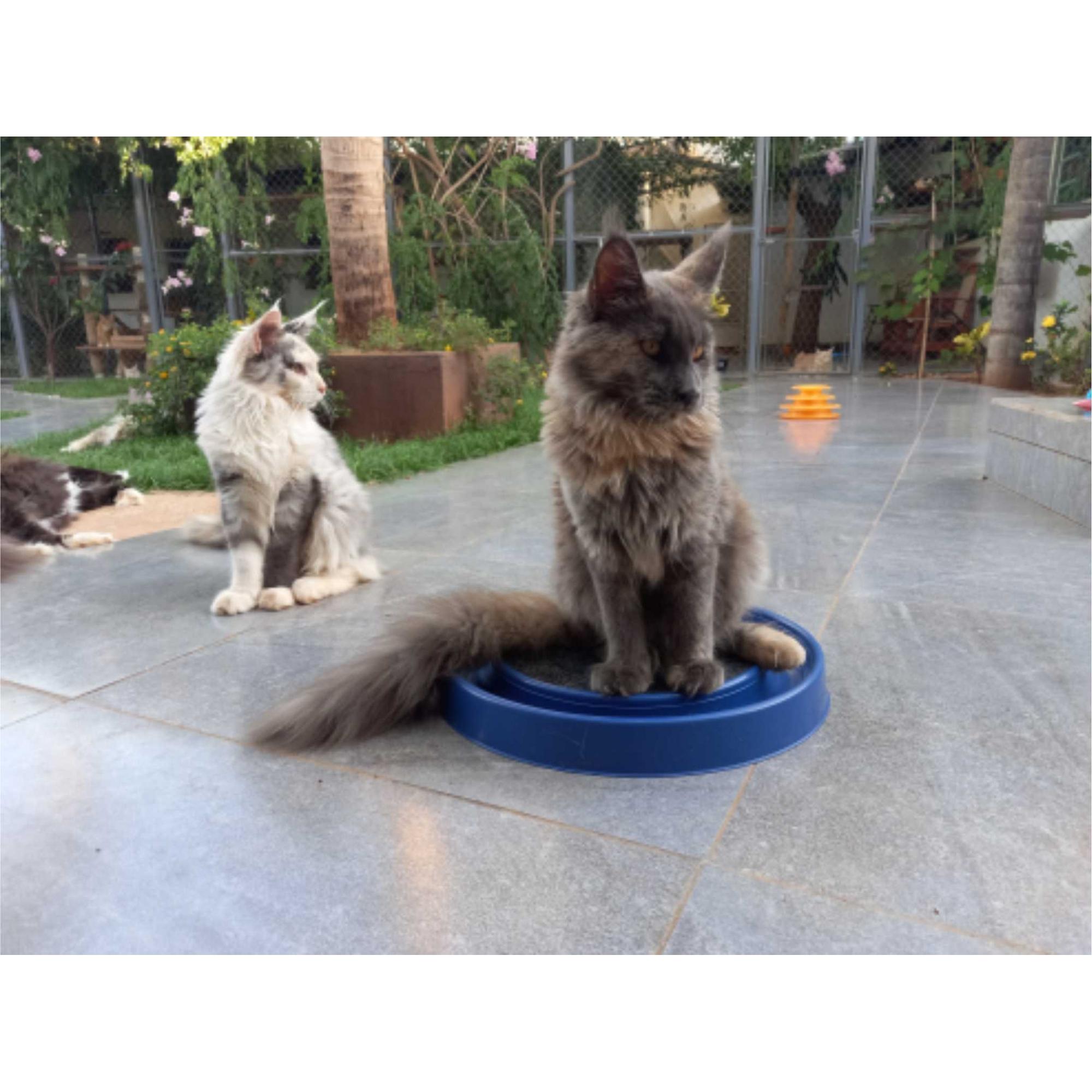 01 Brinq.Cat Miau 37x37x4cm