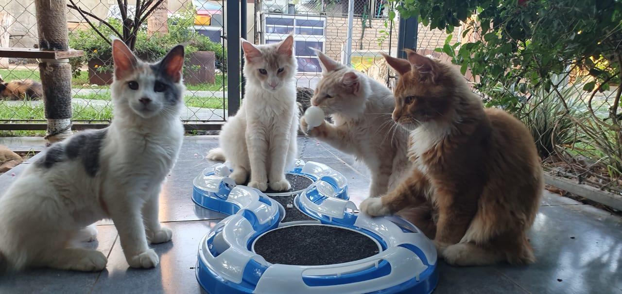 01 Pist Cat Jel Master Azul 81,3x38,3x5,5cm
