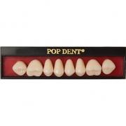 Dente Popdent Posterior Superior - DENTBRAS
