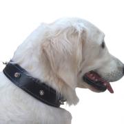 Coleira de Couro Spike Reforçada com Pinos para Cães - nº 7