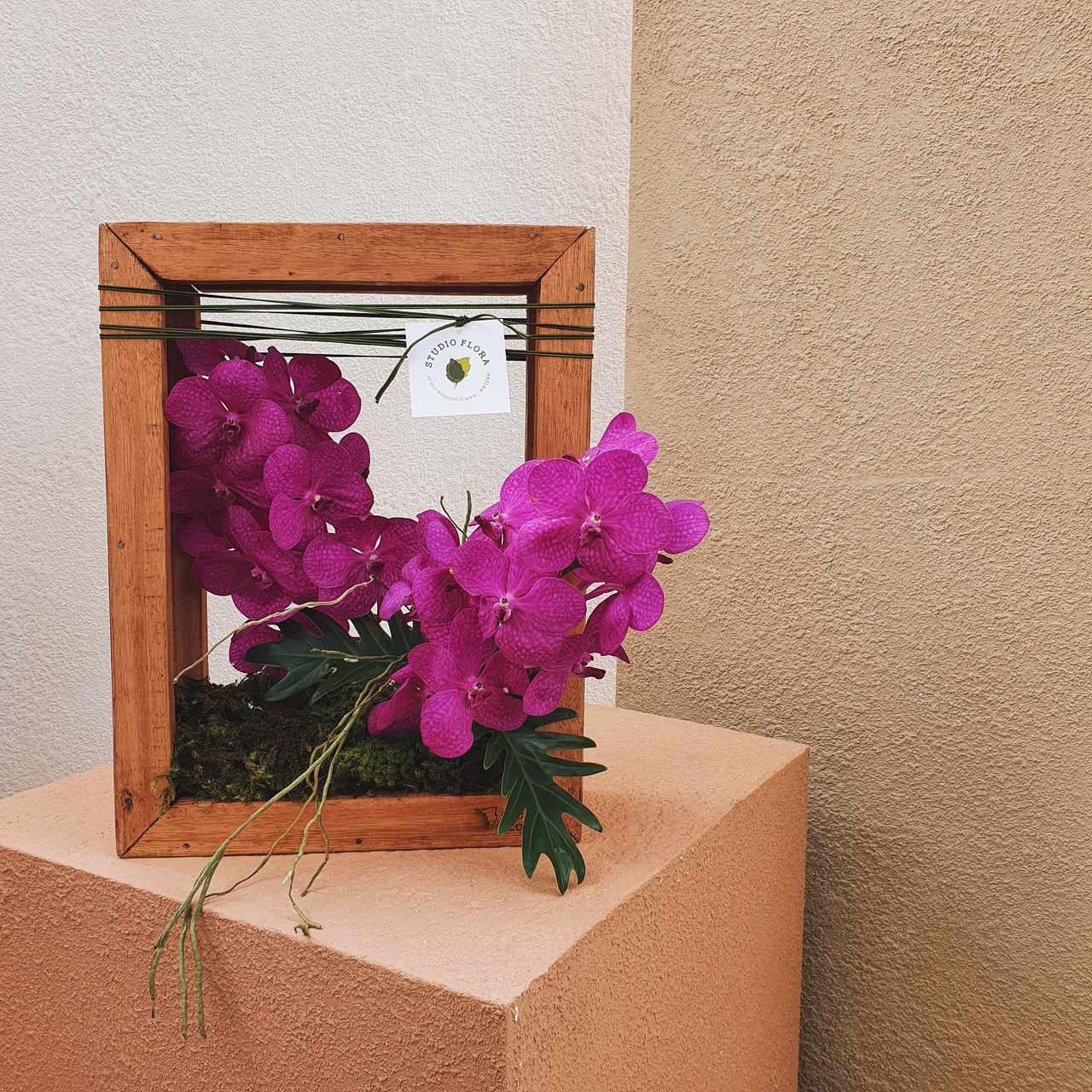 Quadro Vivo com Orquídeas