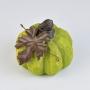 Abóbora Rústica Verde YP-08 A