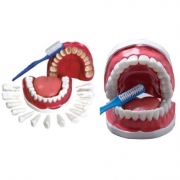 Arcada Dentária com Língua e Escova - ANATOMIC - Cód: TZJ-0312-B