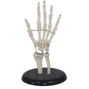 Articulação da Mão 19cm de Altura COLEMAN - COL 1114
