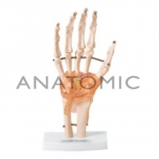 Articulação da Mão - ANATOMIC - Cód: TGD-0162-C