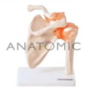 Articulação do Ombro - ANATOMIC - Cód: TGD-0160-C