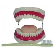 Boca Com Arcada Dentária, Língua e Escova COLEMAN - COL 1403