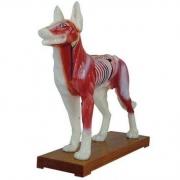 Cachorro Acupuntura COLEMAN - Cód: COL 1601