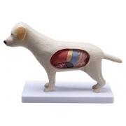 Cachorro - Anatomia - COLEMAN - Cód: COL 3601