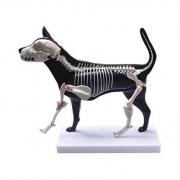 Cachorro - Anatomia e Esqueleto - COLEMAN - COL 3630