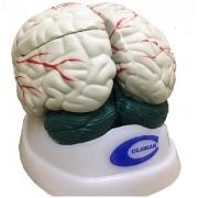Cérebro 3 Partes COLEMAN - Cód: COL 1304