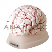 Cérebro com 8 Partes - ANATOMIC - Cód: TGD-0303