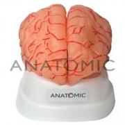 Cérebro com Artérias com 9 Partes ANATOMIC - Cód: TZJ-0303-A