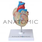 Coração Transparente em 2 Partes com Sistema Condutor - ANATOMIC - Cód: TGD-0322-T