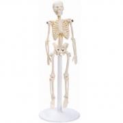 Esqueleto de 20 cm - ANATOMIC - Cód: TGD-0131