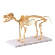 Esqueleto de Cachorro - ANATOMIC - Cód: TGD-0601