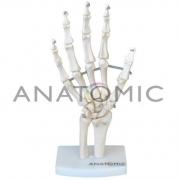 Esqueleto de Mão com Ossos do Punho - ANATOMIC - Cód: TGD-0157-B
