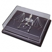 Esqueleto de Morcego COLEMAN - COL 3654