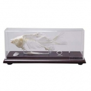 Esqueleto de Peixe COLEMAN - COL 3655