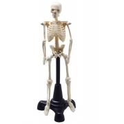 Esqueleto Humano 20cm - COLEMAN - Cód: COL 3103