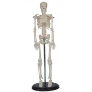 Esqueleto Humano Mini 42cm COLEMAN - Cód: COL 1103