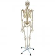 Esqueleto Padrão Aprox. 170 cm com Rodas - ANATOMIC - Cód: TGD-0101