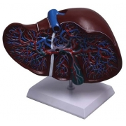 Fígado de Luxo COLEMAN - COL 1312