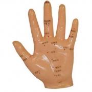 Mão Acupuntura 13cm COLEMAN - COL 1509