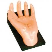 Mão Acupuntura 20cm COLEMAN - COL 1511