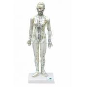 Modelo de Acupuntura Feminino de 50cm - Sdorf - Cód: SD-5099