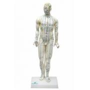 Modelo de Acupuntura Masculino de 50cm - Sdorf - Cód: SD-5098