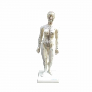 Modelo Feminino de 50 cm para Acupuntura - ANATOMIC - Cód: TGD-0402
