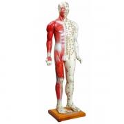 Modelo Masculino de 85 cm para Acupuntura ANATOMIC - Cód: TGD-0401-B