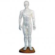 Modelo Masculino de Acupuntura 50cm COLEMAN - COL 1503