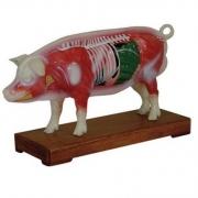 Porco Acupuntura COLEMAN - COL 1604