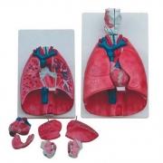 Sistema Respiratório Luxo 7 Partes COLEMAN - Cód: COL 1320